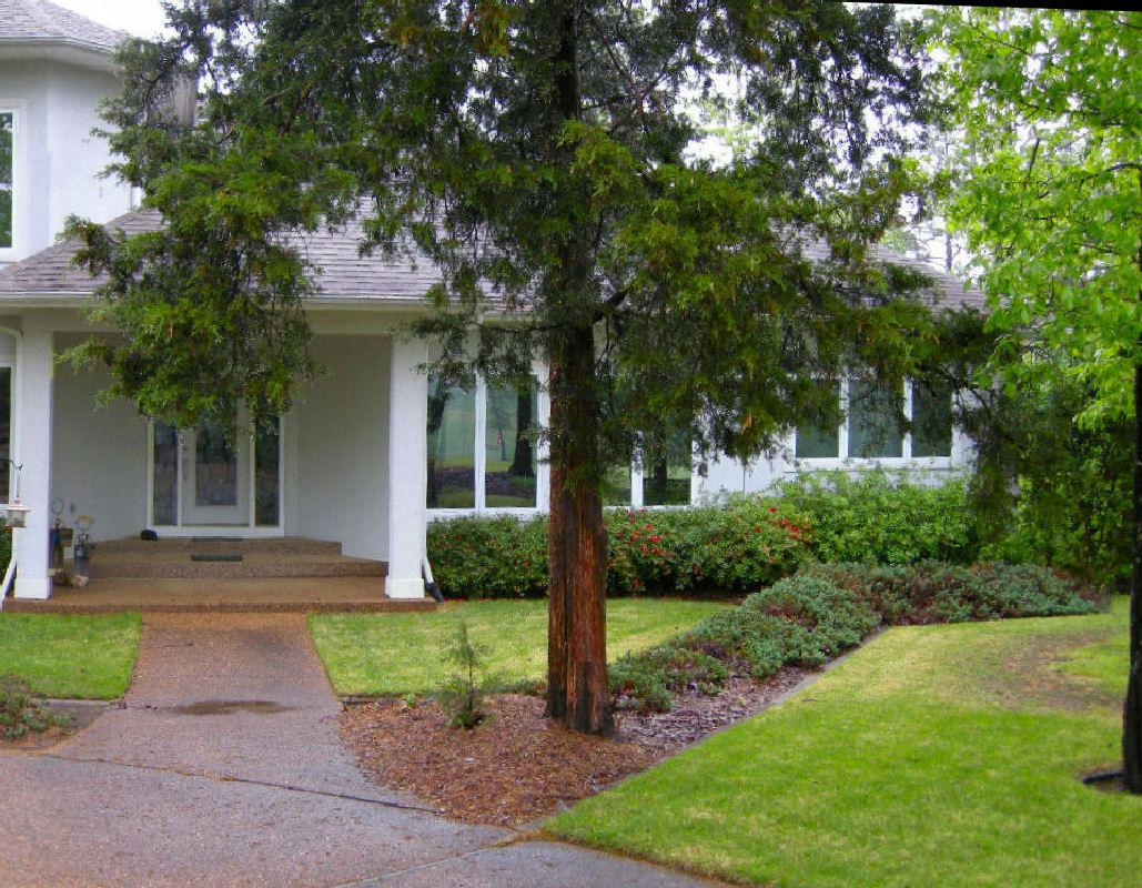 Landscaping Ideas For Cedar Trees : Full height of the cedar seen on left photo
